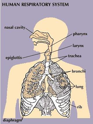 breathing1